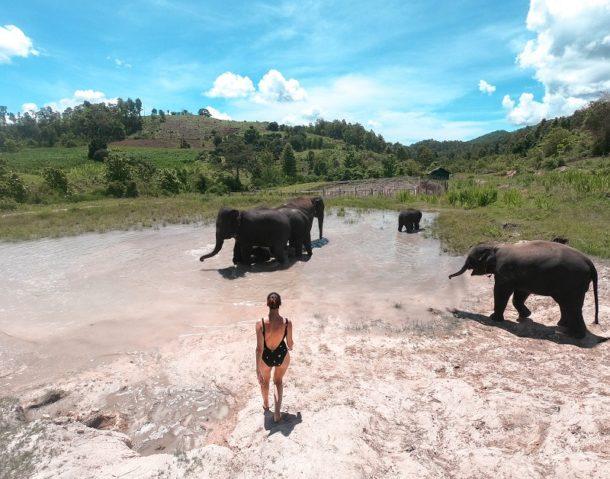 ταυλανδη ελεφαντες